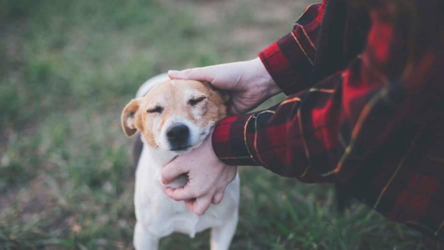 Klp Forsikring Hund